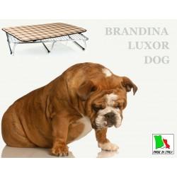 Brandina Dog